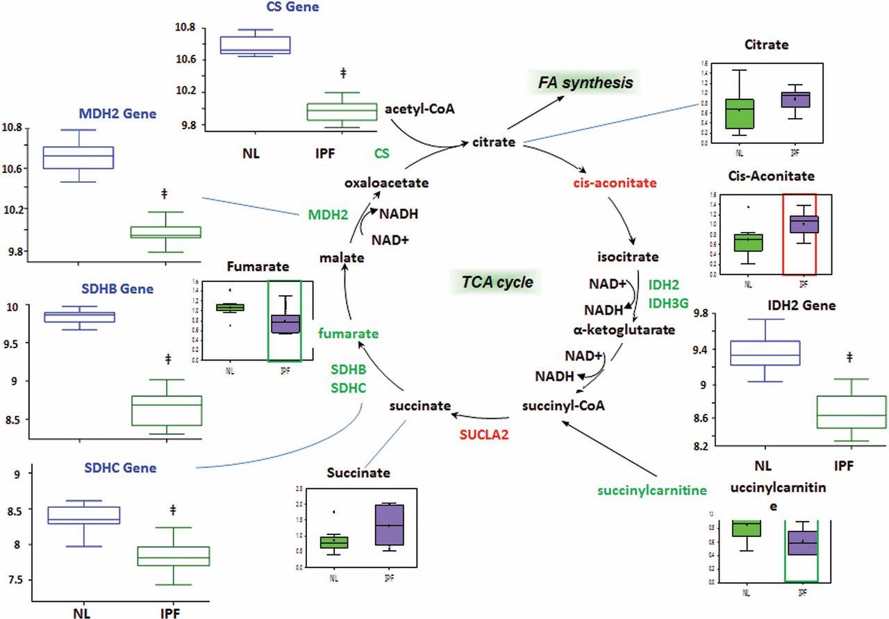 Metabolic Heterogeneity Of Idiopathic Pulmonary Fibrosis  A Metabolomic Study