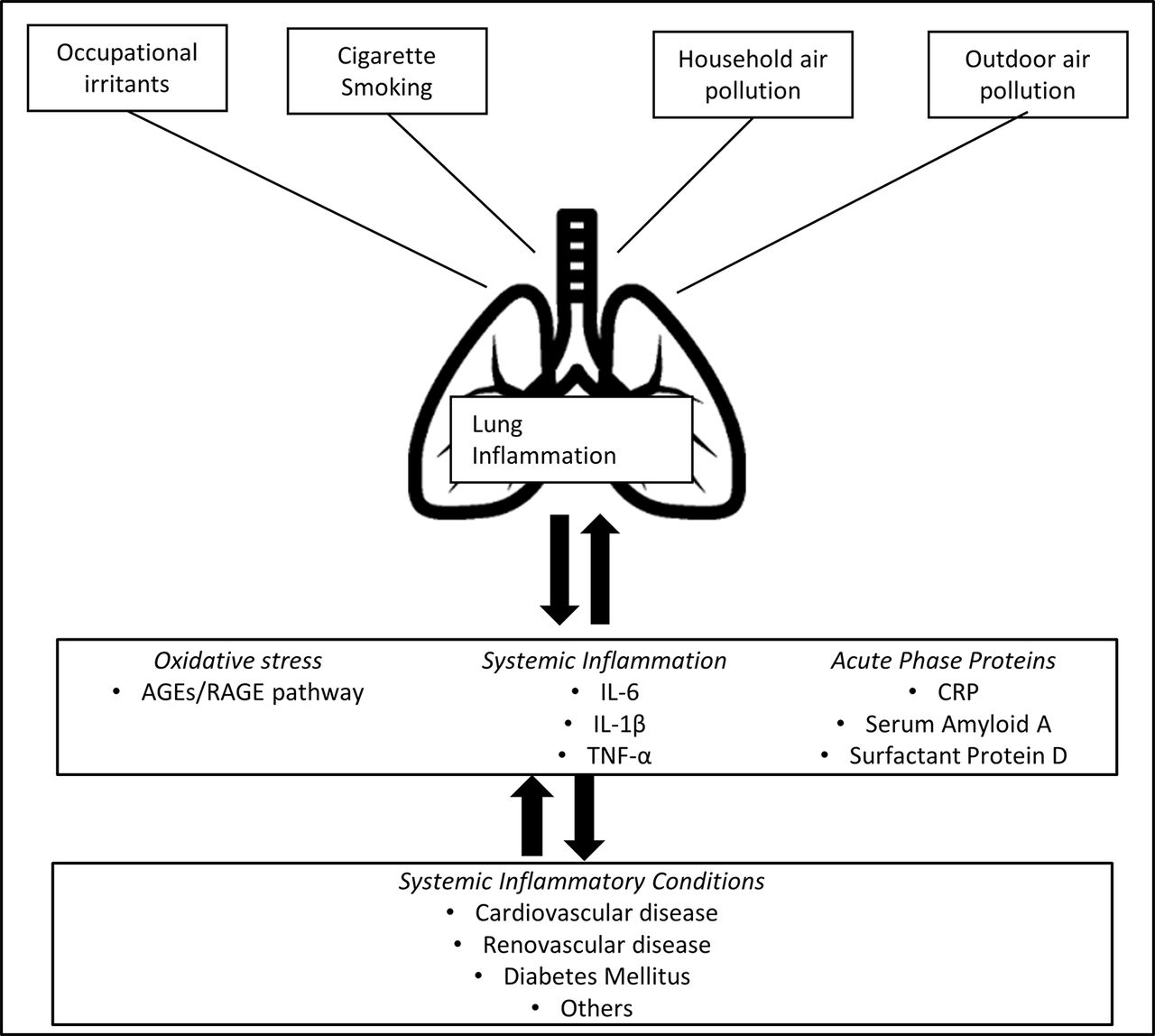 Rapid Decline In Lung Function In Healthy Adults Predicts